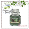 Yankee Candle / Small Jar Candle 3.7 oz. (Balsam & Cedar)