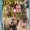 VCD สารคดีลิงบาบูน ตอนกำเนิดลิงบาบูน
