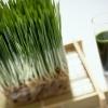 me shielving pantip : วีทกลาส ( Wheat glass ) ต้นข้าวสาลีอ่อน ดียังไง