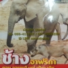 VCD สารคดีช้างอาฟริกา ตอนจอมพลังแห่งป่าดงดิบ