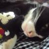 น้องแมวกะตุ๊กตา