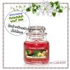 Yankee Candle / Small Jar Candle 3.7 oz. (MacIntosh) *ขายดี