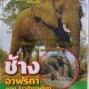 VCD สารคดีช้างอาฟริกา ตอนจ้าวป่าอาฟริกา