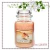 Yankee Candle / Large Jar Candle 22 oz. (Golden Sands)