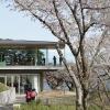 Saigyo Modoshi no Matsu Park : นั่งจิบชาชมวิวอ่าวมัตสึชิมะ