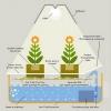 ขั้นตอนการปลูกผักไฮโดรโปนิกส์ แบบฉบับ ฟ้า เฟรช ฟาร์ม
