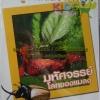 VCD สารคดี เรียรู้ชีวิตสัตว์โลก สำหรับเด็ก มหัศจรรย์โลกของแมลง (เรียนรู้ 2ภาษา ไทย-อังกฤษ)