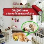5ข้อที่ควรปฏิบัติ ในการปล่อยน้องหมาไว้ที่บ้านตัวเดียว