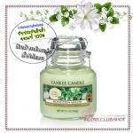 Yankee Candle / Small Jar Candle 3.7 oz. (Honeydew Melon)