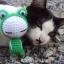 น้องแมวกะตุ๊กตา thumbnail 8