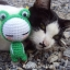 น้องแมวกะตุ๊กตา thumbnail 7
