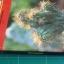 ไม้ประดับมงคล ชมรมพัฒนาไม้ดอกไม้ประดับ thumbnail 3