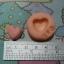 แม่พิม Heart Macaron S thumbnail 1