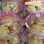 สอนทำขนมไข่ ขนมไข่นุ่มนิ่ม ขนมไข่สอดไส้ thumbnail 44