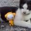 น้องแมวกะตุ๊กตา thumbnail 5