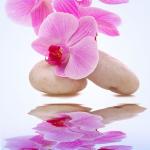 หัวน้ำหอม orchid rain 002896