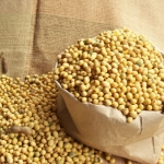 สารสกัดโปรตีนถั่วเหลือง ชนิดน้ำ 100ml