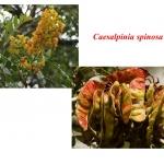 สารสร้างเนื้อเจลจากธรรมชาติ Molina gum 100g