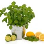 หัวน้ำหอม Cool citrus Basil (bath & body) 003859