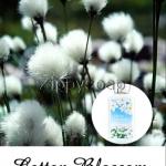 หัวน้ำหอม Cotton Blossom (Bath & Body) 003726