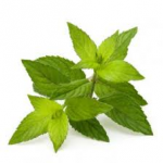 PepperMint Oil (100 ml)