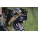 วิธีป้องกันโรคพิษสุนัขบ้า