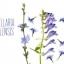สารสกัด Scutellaria Baicalensis 100ml thumbnail 1
