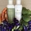 มิสแมรี่ แชมพู ครีมนวด ส่งฟรี 390 บาท Miss Mary Shampoo & Conditioner thumbnail 8