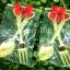 ช้อน-ส้อม ปลายหัวใจ แพคถุงใส thumbnail 4