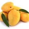 ประโยชน์และสรรพคุณของมะม่วง