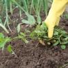 ประโยชน์ของวัชพืช