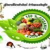 คู่มือการใช้สารชีวภัณฑ์ กำจัด ป้องกันแมลงศัตรูพืช