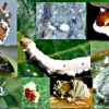ลดต้นทุนการผลิต /การขยายเชื้อราขาว บิวเวอร์เรีย บาเซียน่า