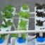 ชุดปลูกผักไร้ดิน 12 ช่องปลูก thumbnail 4