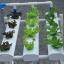 ชุดปลูกผักไร้ดิน 12 ช่องปลูก thumbnail 6