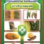 เชื้อราไตรโคเดอร์มา ชนิดน้ำ ป้องกันโรคพืช thumbnail 4