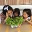 ชุดปลูกผักไร้ดิน 20 ช่องปลูก thumbnail 3
