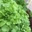 ชุดปลูกผักไร้ดิน 60 ช่องรางขาว thumbnail 3