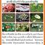 หัวเชื้อราส้ม พาซิโลมัยซิส ไลลาซินัส สารชีวภัณฑ์กำจัดไข่แมลง thumbnail 2