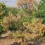 ลาวา สารชีวภัณฑ์กำจัดโรครากและโคนเน่าในพืช thumbnail 13