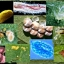 5พิฆาต เชื้อรากำจัดไข่+หนอน+ตัวแมลงศัตรูพืช thumbnail 6
