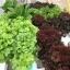 ชุดปลูกผักไร้ดิน 60 ช่องรางขาว thumbnail 9