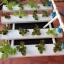 ชุดปลูกผักไร้ดิน (Hydroponics) 16 ช่องปลูก thumbnail 1