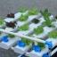 ชุดปลูกผักไร้ดิน 20 ช่องปลูก thumbnail 5