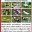 หัวเชื้อรา บิวเวอร์เรีย บริสุทธิ์ สำหรับขยายเชื้อกำจัดแมลง thumbnail 3