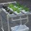 ชุดปลูกผักไร้ดิน 12 ช่องปลูก thumbnail 5