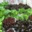 ชุดปลูกผักไร้ดิน 60 ช่องรางขาว thumbnail 10