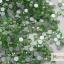 เพชรชวาAA สีเขียวอ่อน ขนาด ss6 ซองเล็ก บรรจุประมาณ 80-100 เม็ด thumbnail 1