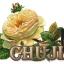 สีเจลทาเล็บ CHUJIE thumbnail 3