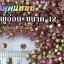 เพชรตูดแหลม สีชมพูอ่อน ซองเล็ก เลือกขนาดด้านในครับ thumbnail 5